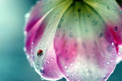 rain-bug