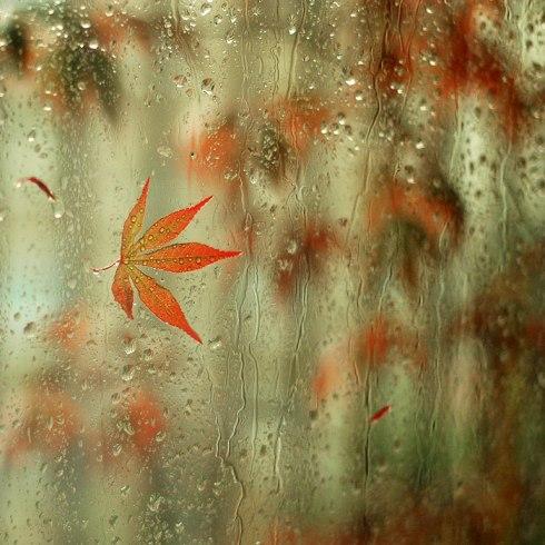 rain-leaf
