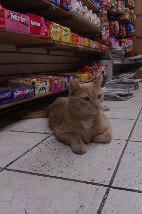 Smoke Shop Cat